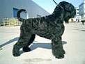http://www.mador.hu/kutyakozmetika/fajtak/terrier_oroszfekete.jpg